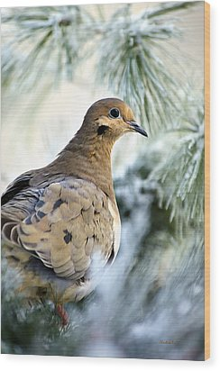 Winter Bird Mourning Dove Wood Print by Christina Rollo
