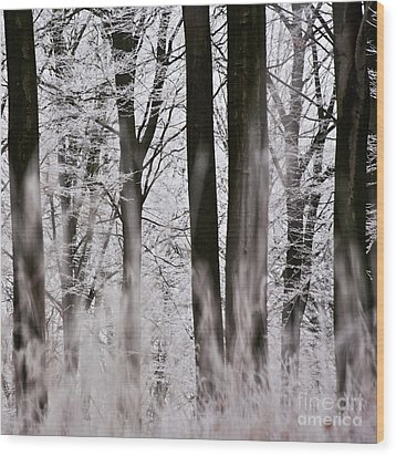 Winter Forest 1 Wood Print by Heiko Koehrer-Wagner