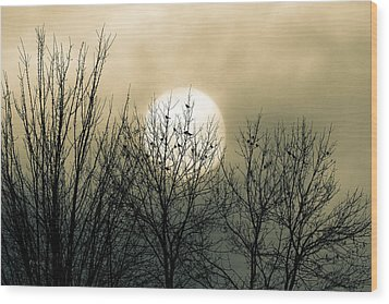 Winter Into Spring Wood Print by Bob Orsillo