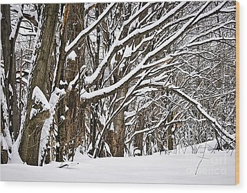 Winter Landscape Wood Print by Elena Elisseeva