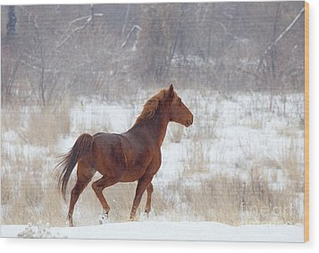 Winter Proud Wood Print by Mike  Dawson
