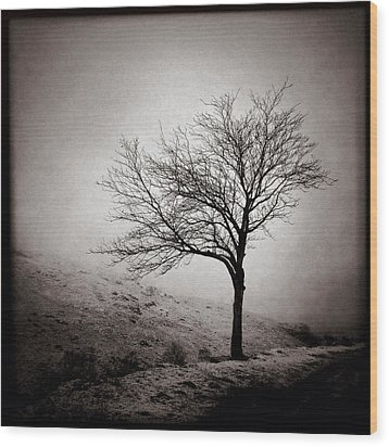 Winter Tree Wood Print by Dave Bowman