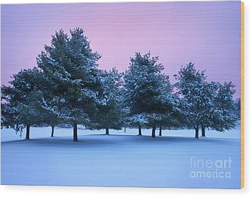 Winter Trees Wood Print by Brian Jannsen