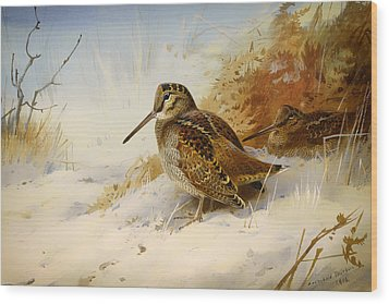Winter Woodcock Wood Print by Mountain Dreams
