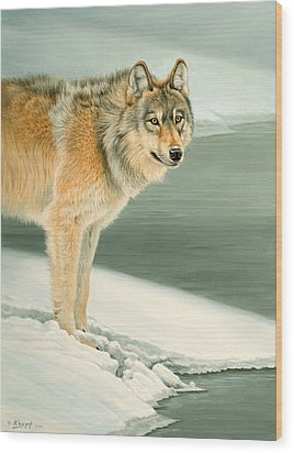 Wolf Portrait-lamar Valley  Wood Print by Paul Krapf