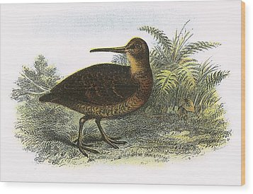 Woodcock Wood Print by English School