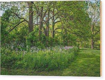 Woodland Phlox   Wood Print by Steve Harrington