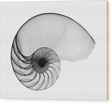 X-ray Of Nautilus Wood Print by Bert Myers
