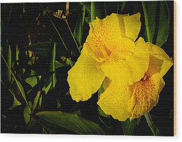 Yellow Canna Singapore Flower Wood Print by Donald Chen