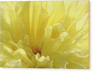 Yellow Dahlia Burst Wood Print by Ben and Raisa Gertsberg