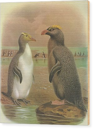Yellow Eyed Penguin And Snares Crested Penguin  Wood Print by J G Keulemans