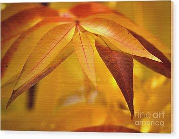 Yellow Leaves At Dawn Wood Print by Deb Halloran