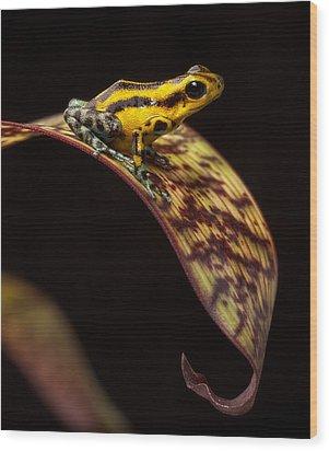 Yellow Poison Arrow Frog Wood Print by Dirk Ercken