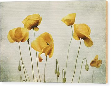 Yellow Poppy Photography - Yellow Poppies - Yellow Flowers - Olive Green Yellow Floral Wall Art Wood Print by Amy Tyler