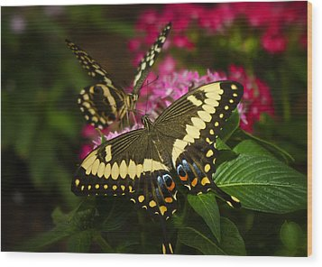 Yellow Swallowtail Butterflies  Wood Print by Saija  Lehtonen