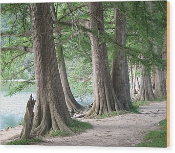 Yesterday's Trees Wood Print by Wendy J St Christopher