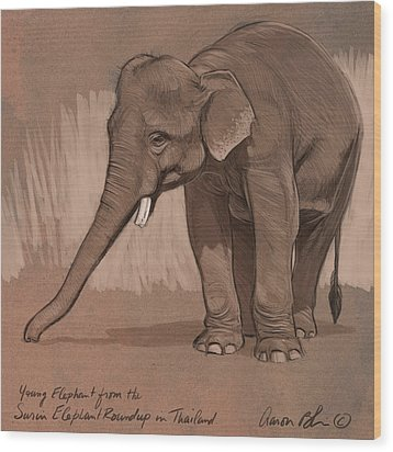 Young Asian Elephant Sketch Wood Print by Aaron Blaise