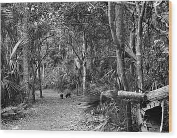 Young Boar. Highlands Hammock S.p Wood Print by Chris  Kusik