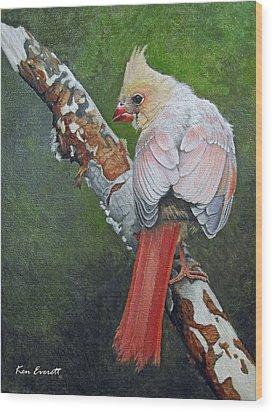 Young Cardinal  Wood Print by Ken Everett