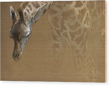 Young Giraffe Wood Print by Aaron Blaise