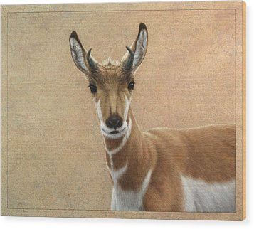 Young Pronghorn Wood Print by James W Johnson