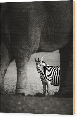 Zebra Barking Wood Print by Johan Swanepoel