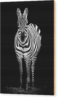 Zebra Wood Print by Paul Neville