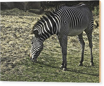 Zebra Striped Fourlegger Wood Print by LeeAnn McLaneGoetz McLaneGoetzStudioLLCcom