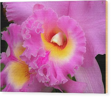 Cattleya Orchid 1 Wood Print by Julie Palencia