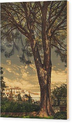 Pine Tree In The Secret Garden Wood Print by Jenny Rainbow