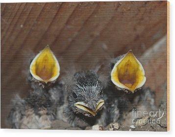 Raising Baby Birds  Www.pictat.ro Wood Print by Preda Bianca Angelica