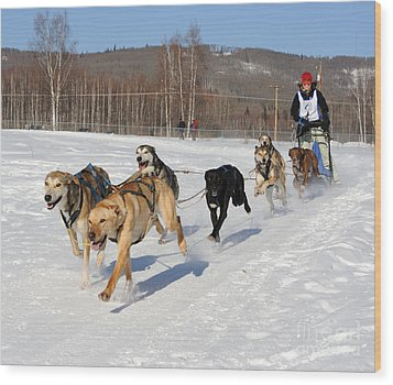 2010 Limited North American Sled Dog Race Wood Print by Gary Whitton