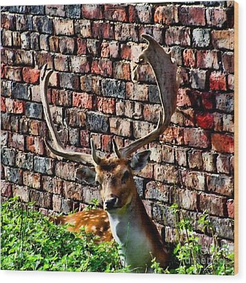 Against The Wall Wood Print by Isabella Abbie Shores
