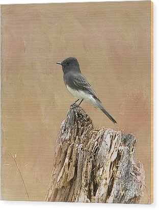 Black Phoebe Wood Print by Betty LaRue
