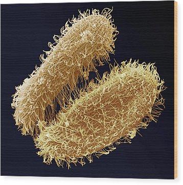 Ciliate Protozoa, Sem Wood Print by Steve Gschmeissner