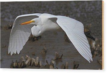Egret Flight Wood Print by Phil Lanoue