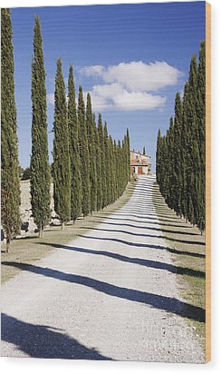 Gravel Road Lined With Cypress Trees Wood Print by Jeremy Woodhouse