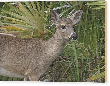 Key Deer Florida Wood Print by Valia Bradshaw