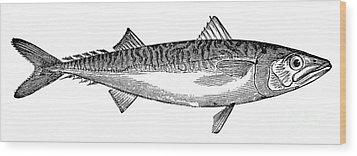 Mackerel Wood Print by Granger