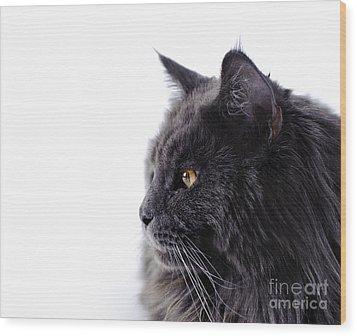 Maine Coon Cat Wood Print by Waldek Dabrowski