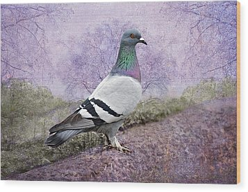 Pigeon In The Park Wood Print by Bonnie Barry