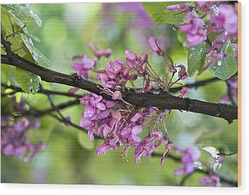 Pink Flowers Of The Love Tree Wood Print by Frank Tschakert