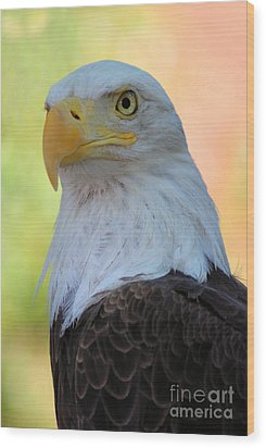 Regal Eagle Wood Print by Linda Eshom