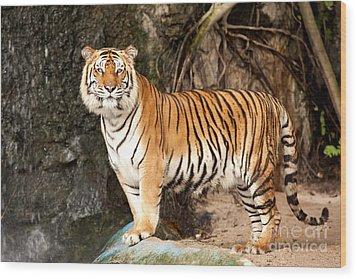 Royal Bengal Tiger Wood Print by Anek Suwannaphoom