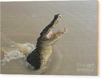 Salt Water Crocodile 2 Wood Print by Bob Christopher