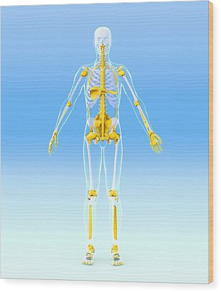 Skeleton And Ligaments, Artwork Wood Print by Roger Harris