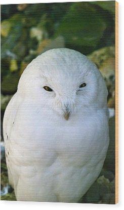 Snowy Owl Wood Print by Design Windmill