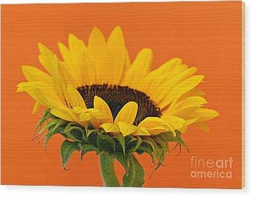 Sunflower Closeup Wood Print by Elena Elisseeva