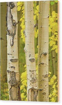 Three Autumn Aspens Wood Print by James BO  Insogna