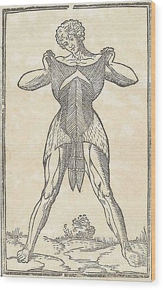 Historical Anatomical Illustration Wood Print by Science Source